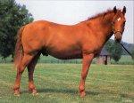 Случной сезон у лошадей. Часть 1