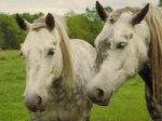 Виды скрещивания лошадей