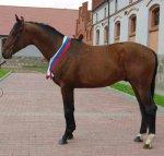 Испытания и возраст лошади