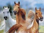 Бонитиpовка племенных лошадей