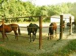 Украина. Деркульский конный завод